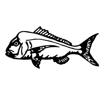 Kiama Fishing
