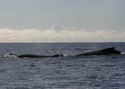 Whales July11